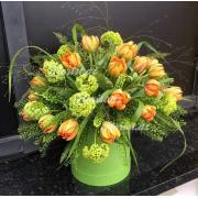 Волшебные Тюльпаны